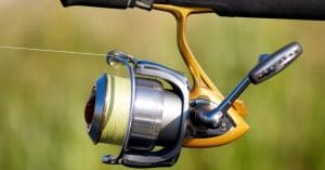 Best Spinning Reels for Trout
